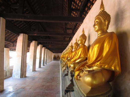 Golden buddhas line the