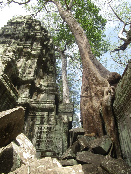 Ta Prohm temple in Angkor Wat where trees and temple are intertwined