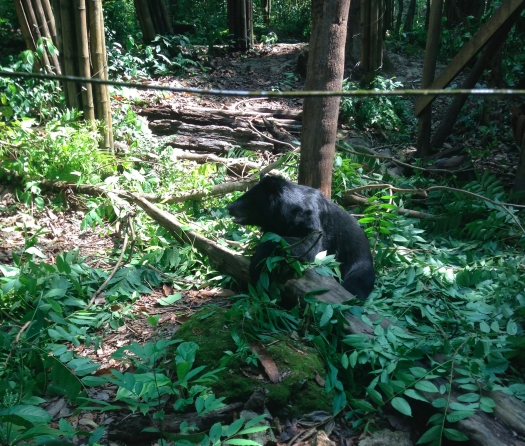 A bear in its enclosure sit among food and jungle